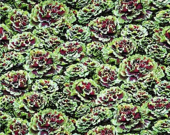 """Vegetable Fabric: Farmer's Market - Farmer John's Kale Green Packed by Paintbrush Studio 100% cotton fabric by the yard 36""""x44"""" (FQ364)"""
