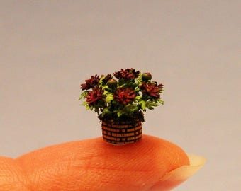 1/4 inch scale miniature-Mum