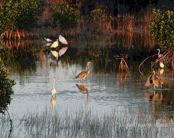 Birds of the Glades II