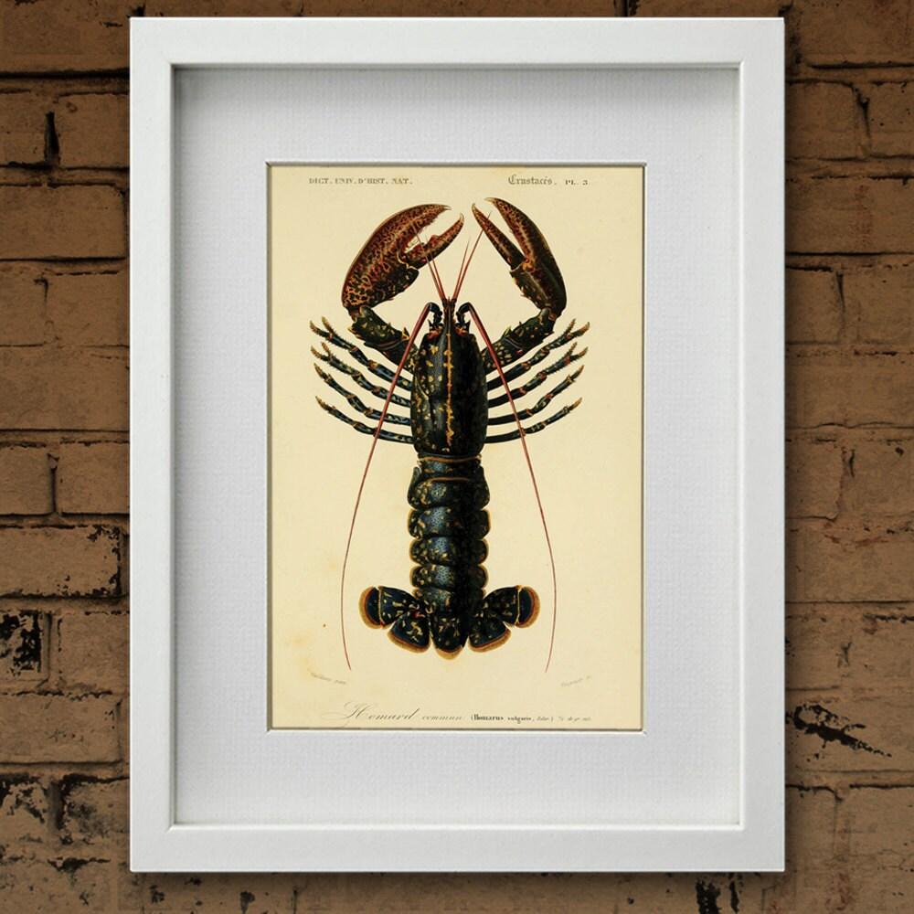 Vintage Lobster Beach art Natural History crustacean art