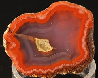 Lovely Polished Coyamito Agate Half Nodule
