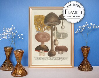 "Vintage illustration of Mushrooms - framed fine art print, botanical art, 8""x10"" ; 11""x14"", FREE SHIPPING - 15"