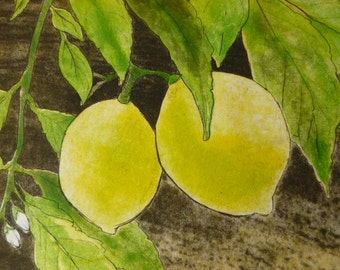 Lemons - Three-plate color etching with aquatint