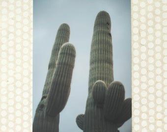 Saguaro Cactus Pair Photo Print