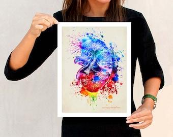 "Watercolor Kidney, 11"" x 14"", Anatomy Medical print, Registered Nurse Gift, Nurse Graduation gift, Watercolor Splatter art, Anatomy Kidney"