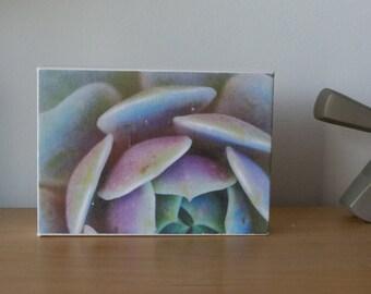 Succulent canvas
