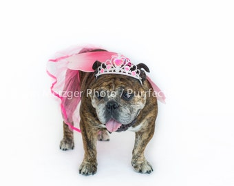 Princess English Bulldog Print, Fine Art Photography Print, Purrfect Pawtrait Pet Photography, Animal Photography