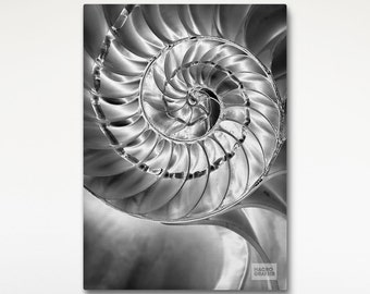Nautilus Shell Print, Canvas Print, Black And White, Macro Photography, Nature Print Canvas,  Hotel Room Wall Art, Wall Decoration