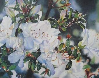White Azaleas  - Floral Art Print Azaleas Art