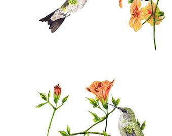 Ruby-Throated Hummingbirds Watercolor Illustration