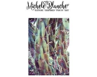 Cactus Photo Art, Cacti Photography, Succulents Nature Greens Photos, Dessert Nature Print set, Sedum Art, Photo Art Print Set