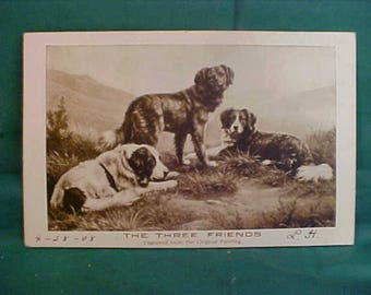 Vintage 1908 Hearding Dog Real Photo Postcard by Sheahan's Famous Pictures  The Three Friends from original Print