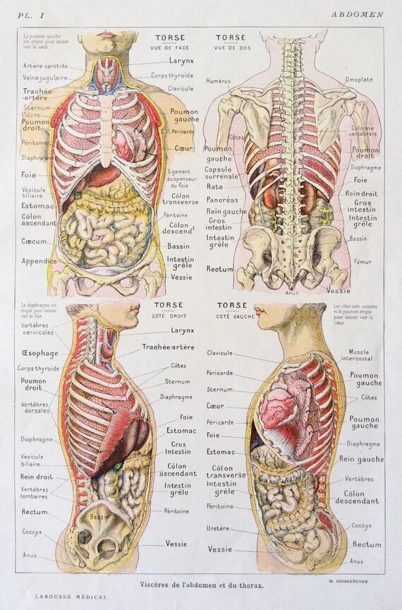 1920er Jahre Französisch menschlichen Anatomie ihrer Zerlegung
