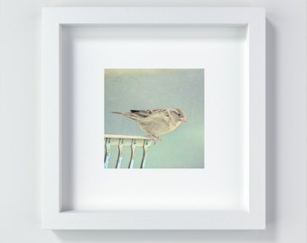 LITTLE SPARROW Art Print Bird Art 13 x 13 + 20 x 20 cm