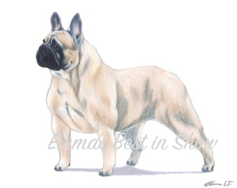 French Bulldog Dog - Archival Fine Art Print - AKC Best in Show Champion - Breed Standard - Non-Sporting Group - Original Art Print