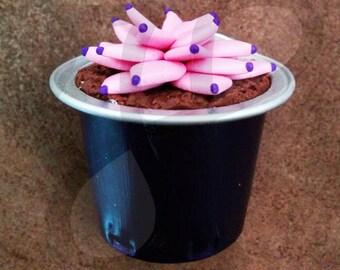 Graptopetalum succulent potted mini Magnet: