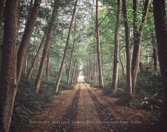 Forest Photograph | Tree Pathway | Washington Photo | Travel Photograph | Trees Print | Nature Photo | Pacific Northwest