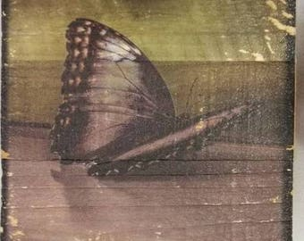 Butterfly Wooden Canvas Transfer