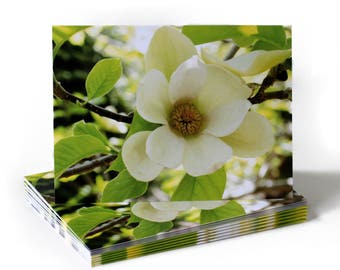 Magnolia Flower Just Because Greeting Card