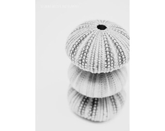 Black and White Photography Sea Urchin Abstract Nautical Decor Coastal Nature Rustic Minimalist Contemporary Art Grey Seashell 5x7 Print