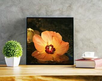 Tropical Hibiscus Darkly Revealing - Photo Print Canvas Wood Acrylic Metal - 1835