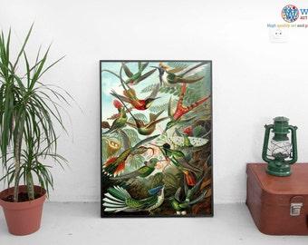 Hummingbirds Print (Illustration, Ornithology) Various Sizes by Ernst Haeckel