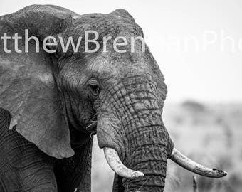 Canvas Picture Photo Art, Black and White Elephant, Wildlife Portait