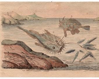 1835 exotic underwater print rare original antique hand colored engraving - fish ocean beach marine scene