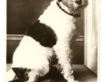 1930s Terrier Dog Real Photo Postcard Antique Vintage RPPC