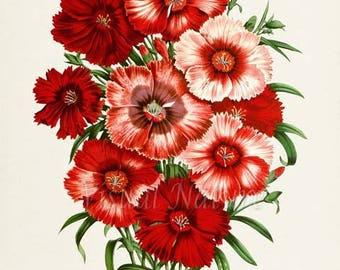 China Pink Flower Art Print, Botanical Art Print, Flower Wall Art, Flower Print, Floral Print, red pink flower art print
