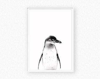 Penguin Print, animal print decor, penguin art wall, penguin photography, black white animal
