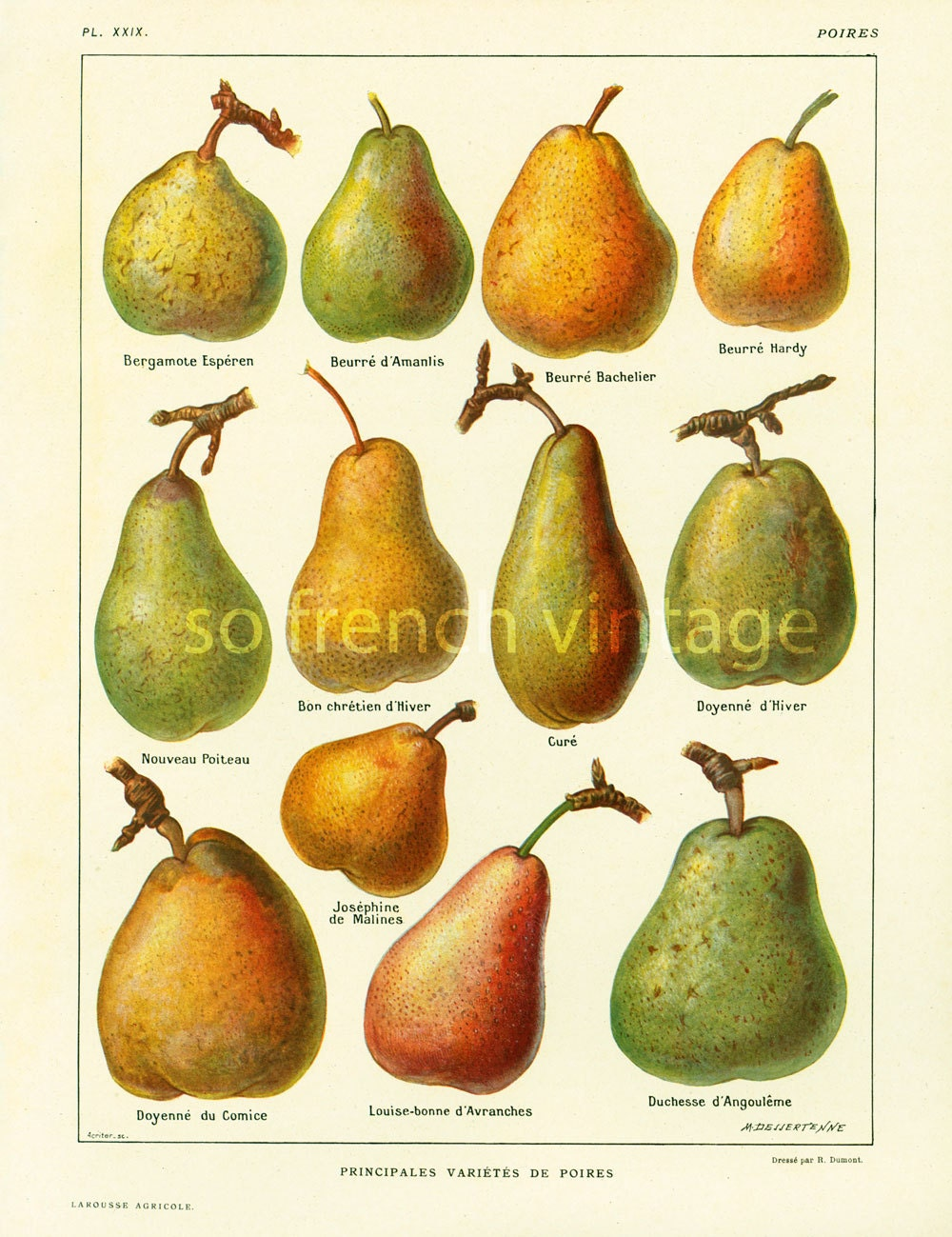 1922 Antique Pear Print Pears Wall Art Vintage Lithograph