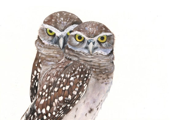 Burrowing Owl Watercolor and Gouache Painting print of watercolor painting A3 size wall art print - bird art print