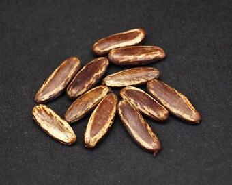 50 Martinique flamboyant tropical seeds