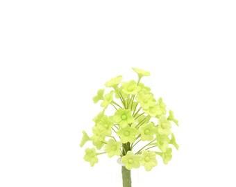 Light green blossoms