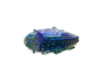 Jewel Beetle Polybothris sumptuosa gema Real Insect Metallic Iridescent