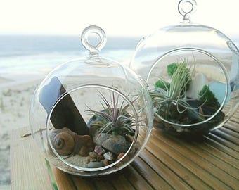 Air Plant Hanging Globe Terrarium | Tillandsia | Beach Decor | Air Plant Holder | Air Plant Container | Airplant Gift | Airplant Kit