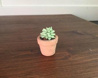 Handmade miniature succulent green