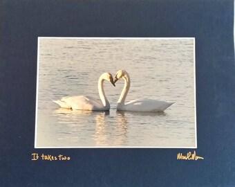 Signed Swan Print