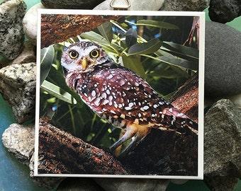 Burrowing Owl Photo Tile
