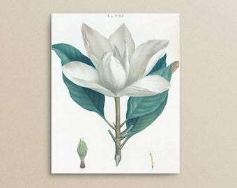MAGNOLIA - 8 x 10 Botanical Art Print *Digital Download*