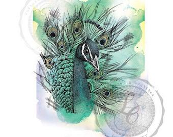Hand Drawn Peacock Print