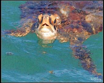 Sea Turtle...Sea Turtle Coastal Florida…Sea Turtle...Photo...Photograph...Photography...Print