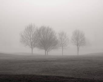 Landscape Photograph, Monochrome, Berkshire, Misty Trees