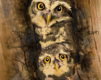 Two owls in the nest