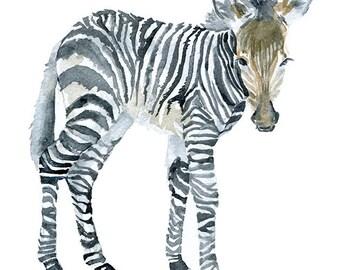 Zebra Watercolor Painting - 11 x 14 - Giclee Print - African Animal Art - Zebra Painting