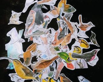 Paper Ephemera Bird Theme 50 Images for Paper Crafts Decoupage Scrapbooking
