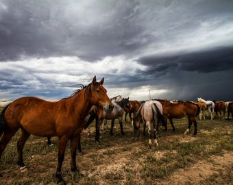 Horse, Photography, Equine, Print, Herd, Picture, Horses, Photo, Stallion, Wall, Art, Mare, Decor, Steed, Artwork, Western, Animal, Storm