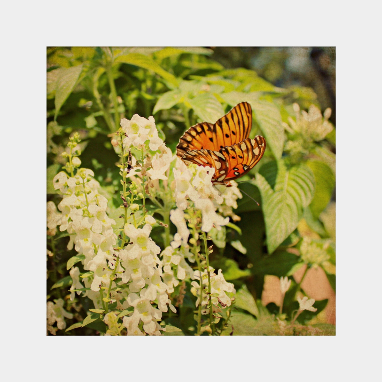 Butterfly Photograph Floral Photo Square Print Orange Green