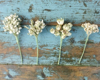 Whites Dried Flower Wired Stems Buttonholes, Hair Set of 6